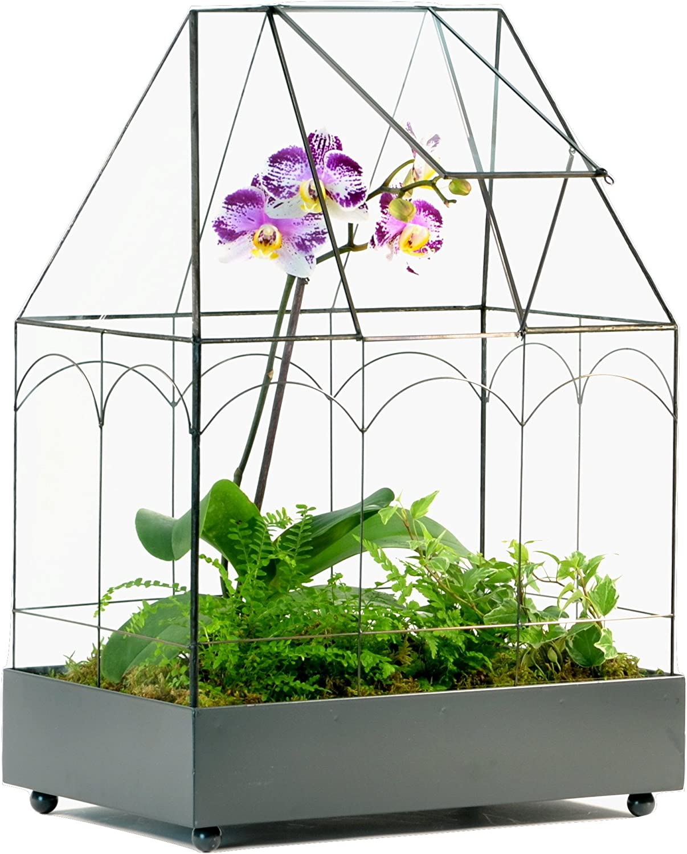 H Potter Glass Terrarium Wardian Case Succulent Planter Container for Plants Flowers Orchids Foliage and More