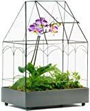H Potter Wardian Case Planter Glass & Metal Terrarium Container for Succulents, Plants, Flowers, Orchids, Foliage & More