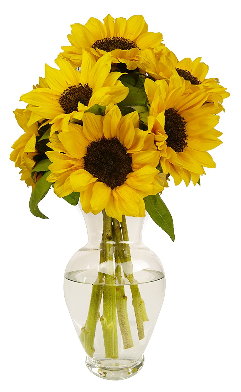 Amazon benchmark bouquets yellow sunflowers with vase amazon benchmark bouquets yellow sunflowers with vase grocery gourmet food mightylinksfo Choice Image
