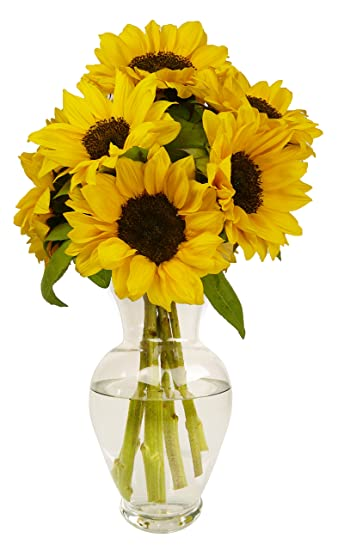 Amazon Benchmark Bouquets Yellow Sunflowers No Vase Fresh