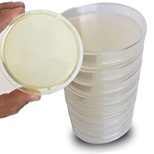 Malt Extract Agar Plates - Evviva Sciences - Great for Mushrooms, Molds, Fungus - 10 Prepoured MEA Petri Dishes - Also Great for Science Fair Projects!