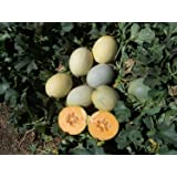 Melon Papayadew Seeds, Packet of 20 Seeds, Non-GMO