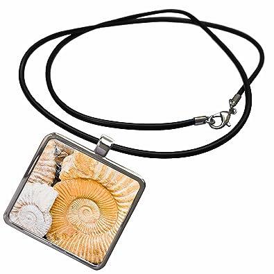 Amazon com: 3dRose Danita Delimont - Fossils - Ammonite