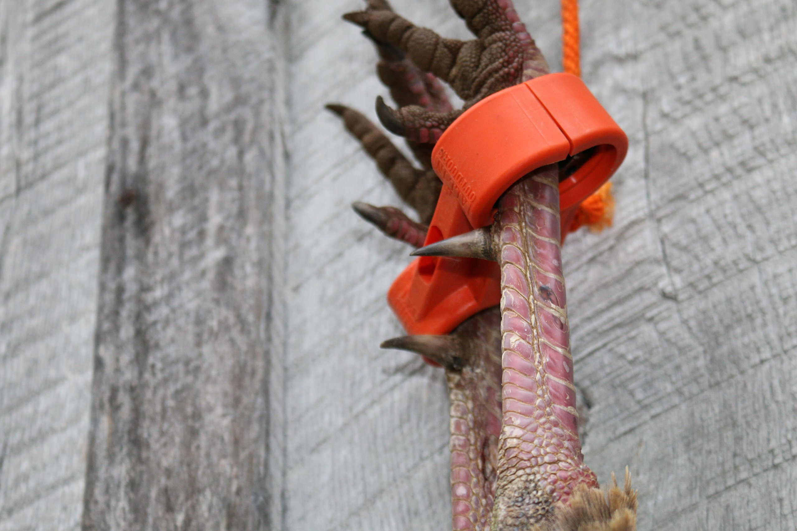 Leg Cuff Deer Drag & Turkey Tote Carrier Combination Hunting Tool by All - In Outdoors LLC (Image #1)