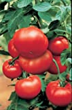 JustSeed - Vegetable - Tomato - Bush Steak - 10 Seeds