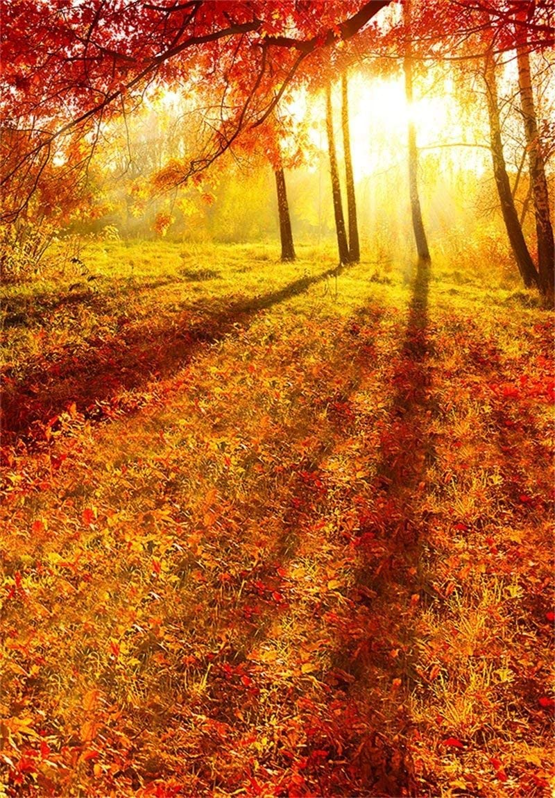 CdHBH 10x12ft Beautiful Autumn Nature Scenery Forest Trees Under The Sun Leaves Studio Photo Studio Photography Props Photo Studio Photo Photography Background Wallpaper Home Decoration