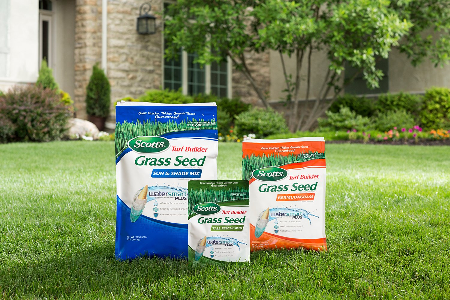 Best Grass Seed - My choice