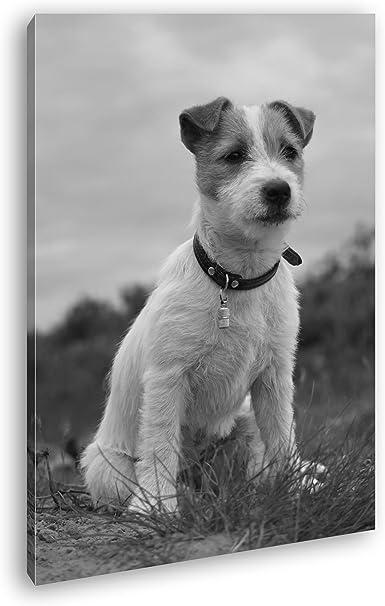 deyoli süßer Jack Russell Terrier Efecto: Negro/Blanco como Lienzo, diseño Enmarcado en Marco de Madera, impresión Digital Marco, no es un póster o Cartel, Lona, 80x60