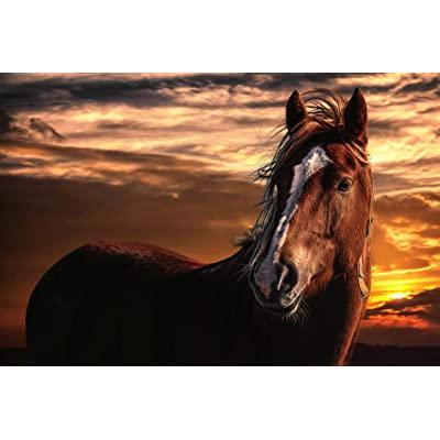 Adult Puzzle Classic Jigsaw Puzzle 1500 Piece Children Elderly Puzzle DIY Horse in The Sunset Wooden Puzzle Modern Home Decor Festival Gift Wall Art 87x57cm: Toys & Games