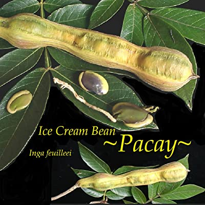 AchmadAnam - Live Plant ~PACAY~ ICE Cream Bean Inga feuilleei Fruit Tree Monkey Tamarind larg Potd : Garden & Outdoor