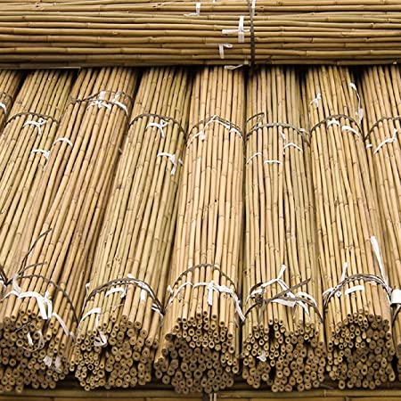 150 x 5ft Heavy Duty Bamboo Garden Canes Strong Thick Quality Plant Support