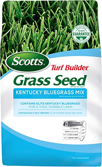 Scotts Turf Builder Grass Kentucky Bluegrass Mix