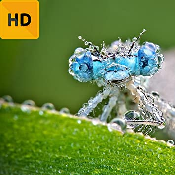 Amazoncom Best Dragonfly Hd Free Wallpaper Appstore For