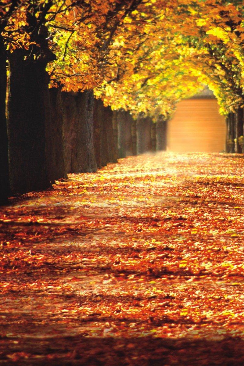 5 x 7ft写真背景バックドロップNature Fall Autumn Yellowツリーリーフfor Photo Studio Portrait Shooting   B019N1UOYI