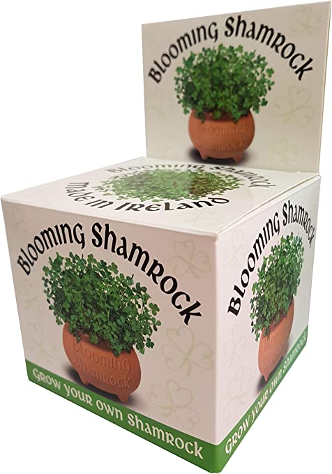 Shamrock Gift Company Blooming – Maceta para champú – Crecer tu ...