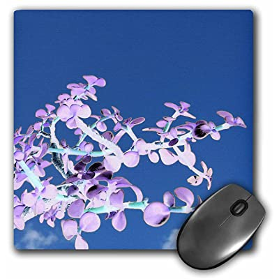 3dRose Mouse Pad Bonsai Inverted Purple White Against Sky Portulacaria - 8 by 8-Inches (mp_182075_1): Office Products