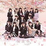 桜並木(DVD付)