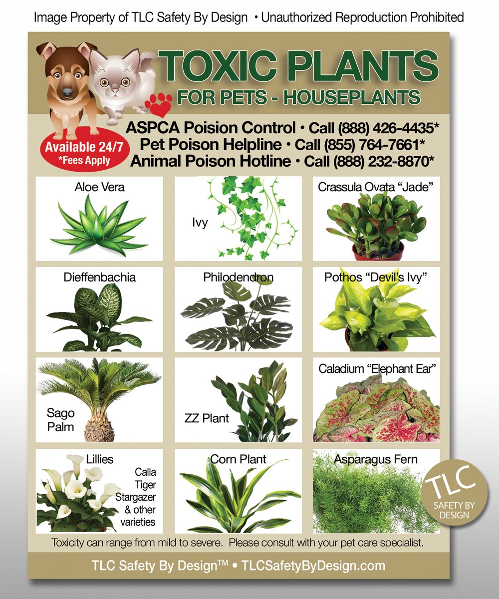 100 house plants not poisonous cats 6 poisonous for Easy houseplants safe for pets