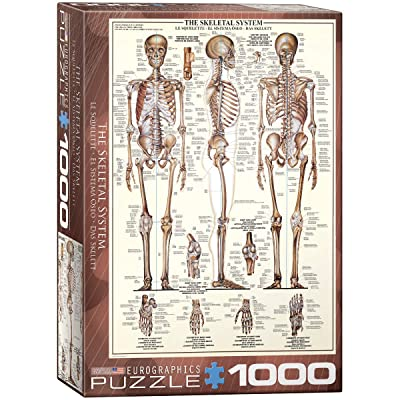 EuroGraphics Skeletal System (Chart) Puzzle (1000-Piece): Toys & Games