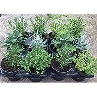 Plantas Naturales y Aromáticas - Pack 12 Plantas de Temporada Variadas 10,5 cm ø- VIPARGARDEN 1 (Pack 12 Plantas con…