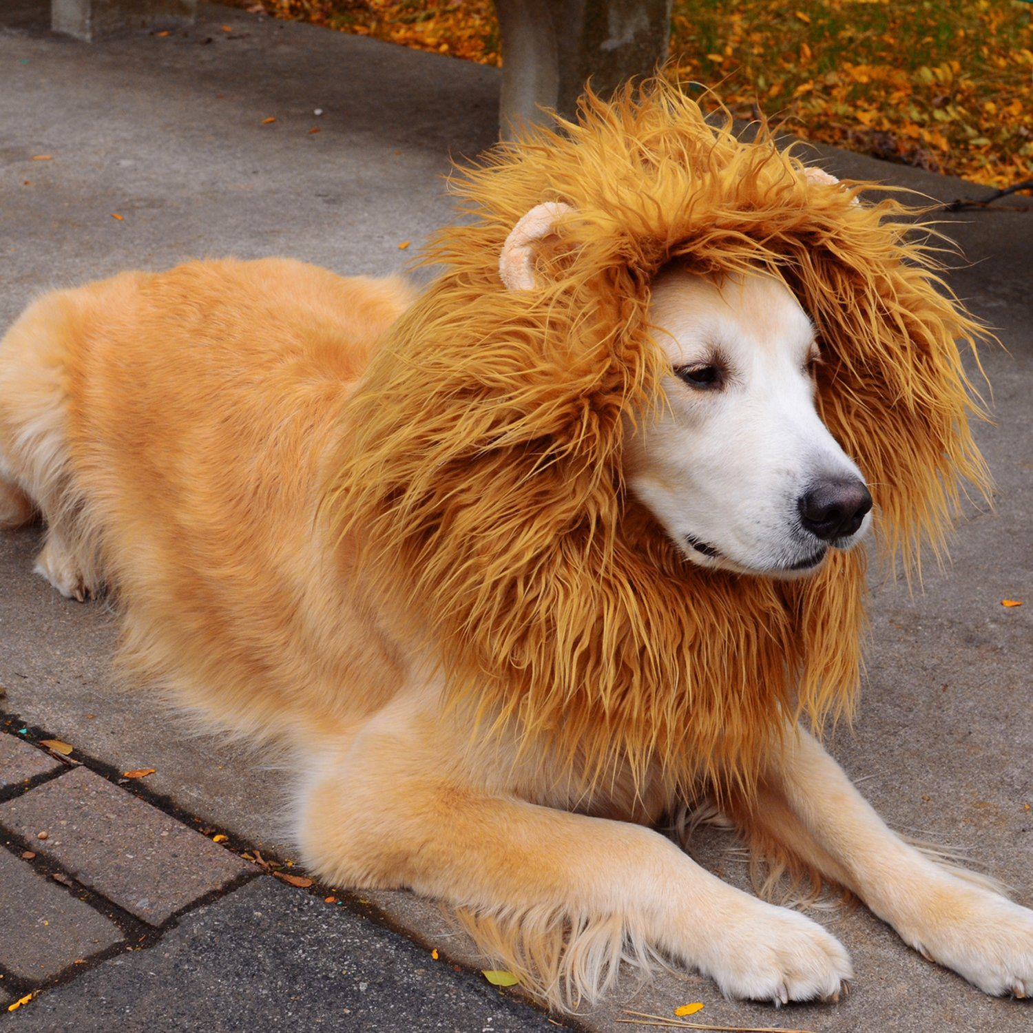 ENJOY PET Lion Mane for Dog, Dog Costume Lion Wig with Ears and Tail for Medium to Large Dogs, Adjustable Washable Dog Fancy Dress Halloween Costume Christmas Gift