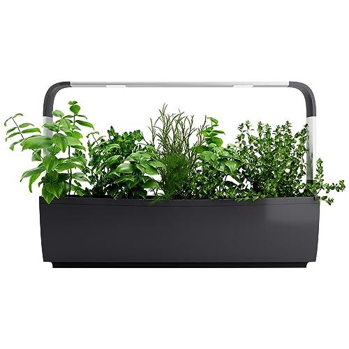 Tregren T12 Potager d'intérieur Connecté 12 plantes, Kit prêt à pousser et Jardinière Autonome pour herbes aromatiques, petits légumes, fleurs - Cultivez avec votre application smartphone - Gris