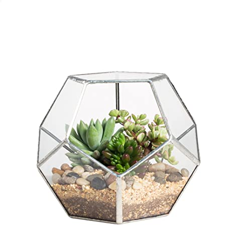 NCYP Silver Clear Glass Dodecahedron Geometric Terrarium Globe Planter  Container Indoor Fairy Garden Pot Centerpiece For