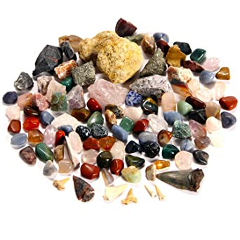 Best Rock Collection Includes Meteorite Fragment Megalodon Shark