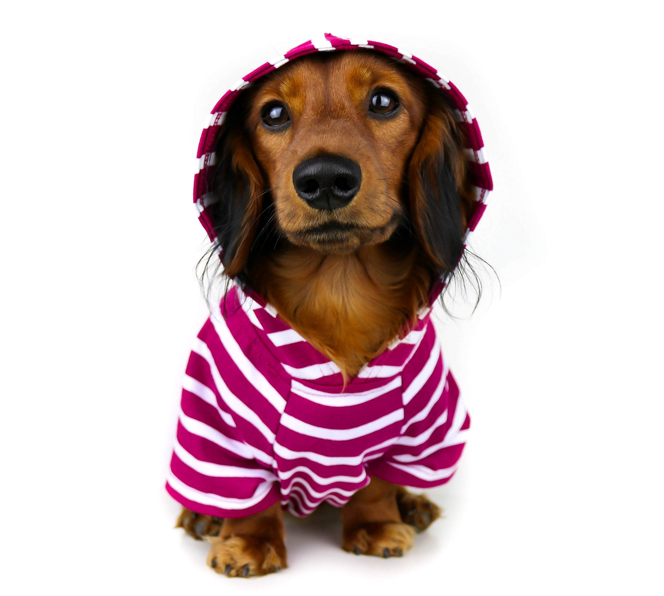DJANGO Dog Hoodie and Super Soft and Stretchy Sweater with Elastic Waistband and Leash Portal (Small, Boysenberry)