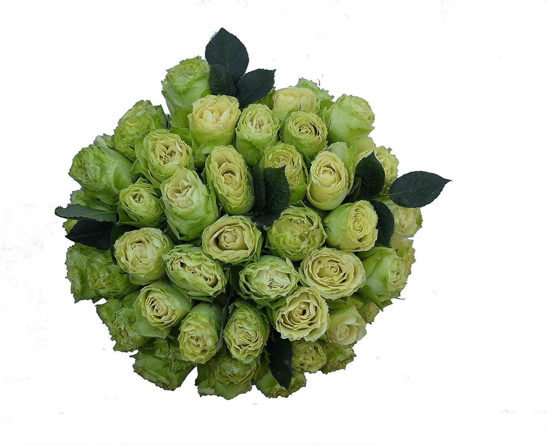 Amazon.com : 50 Farm Fresh Green Roses Bouquet By JustFreshRoses ...