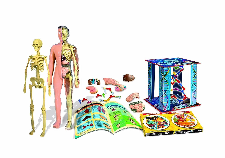 Clementoni 69731.1 - Galileo - Der menschliche Körper: Amazon.de ...