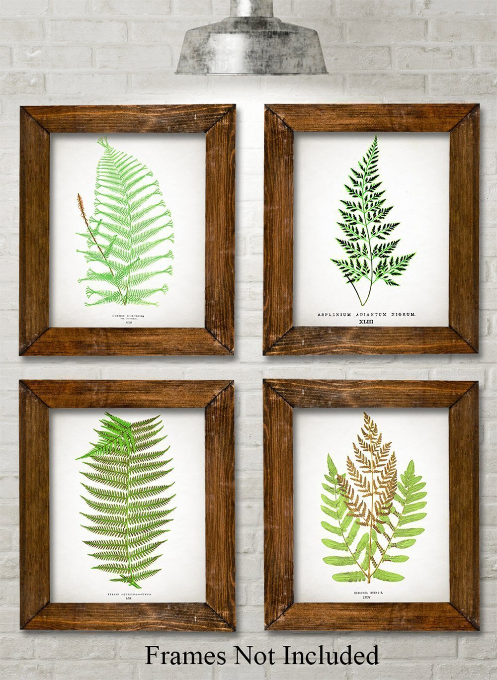 Antique Fern Botanical Prints - Set of Four Photos (8x10) Unframed by Personalized Signs by Lone Star Art