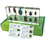 REALBUG 12 Bugs Collection Desk Decoration