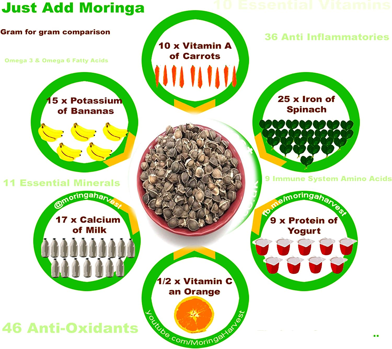 Moringa Oleifera 1000 Wingless Seeds Approx.| Premium Quality Drumstick Tree Planting Semillas De Moringa EcoStyle ! PKM1 Variety Organic Moringa Seeds 200 GMS Malunggay Snacking