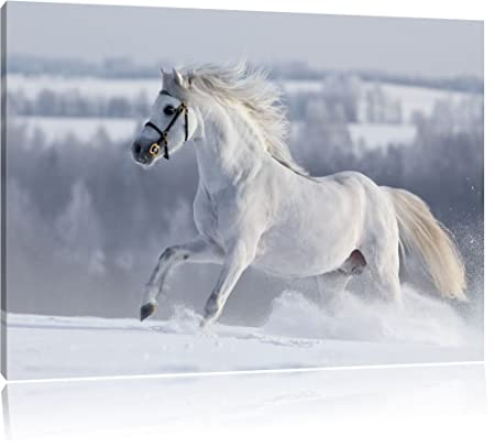 White horse on snow meadow, painting on canvas, XXL Pictures ...