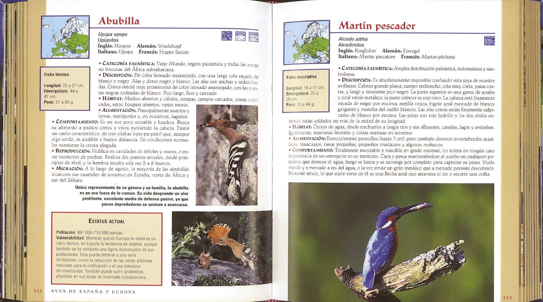 Aves De España y Europa (Vida verde): Amazon.es: Varios Autores: Libros