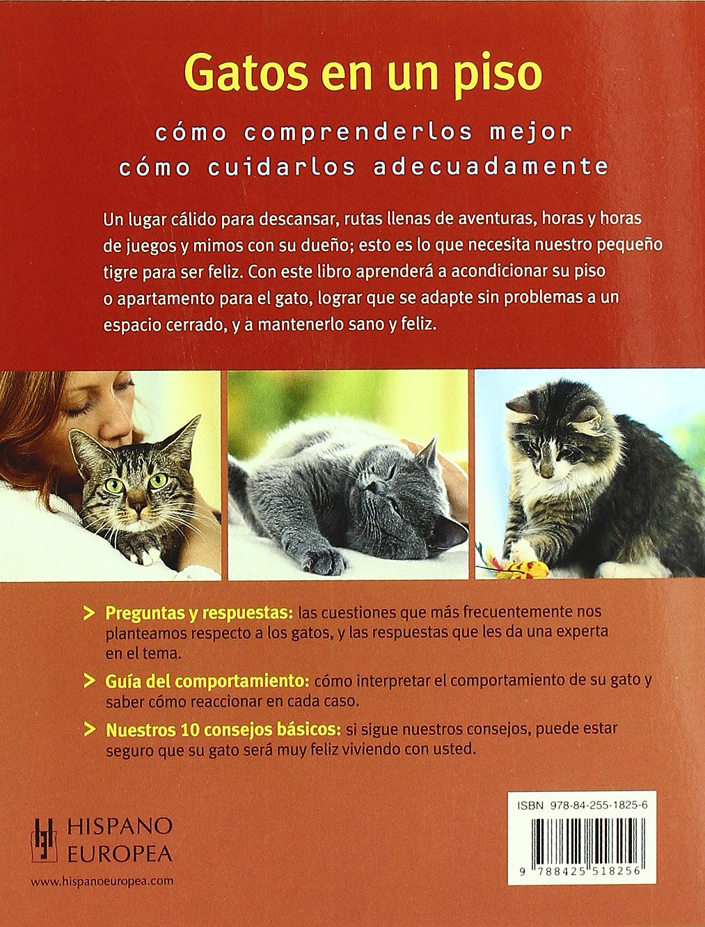 Gatos en un piso/ Indoor Cats (Mascotas/ Pets) (Spanish Edition): Katrin Behrend: 9788425518256: Amazon.com: Books