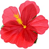 Boland 24er Set Blumendekor Hibiskusblüten Hawaii-Stil, mehrfarbig