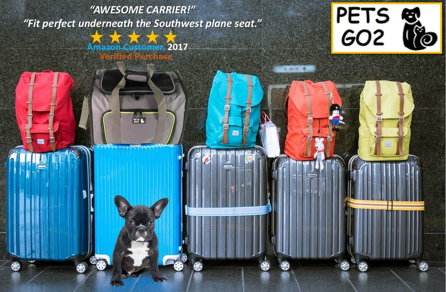 Amazon Com Pets Go2 Pet Carrier For Dogs Cats Airline Approved