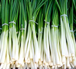 Fast-Growing Bunching Onion Seeds -