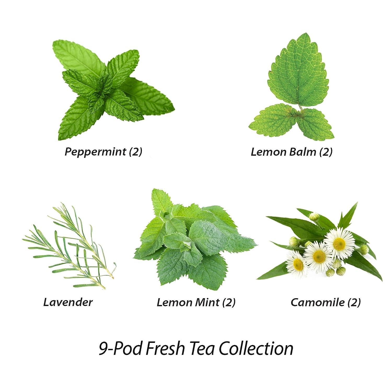 AeroGarden Fresh Tea Seed Pod Kit 6-Pod