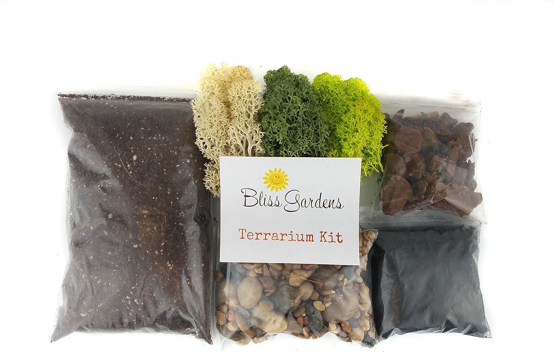 Bliss Gardens Terrarium DIY Succulent/Cactus Kit (Small)