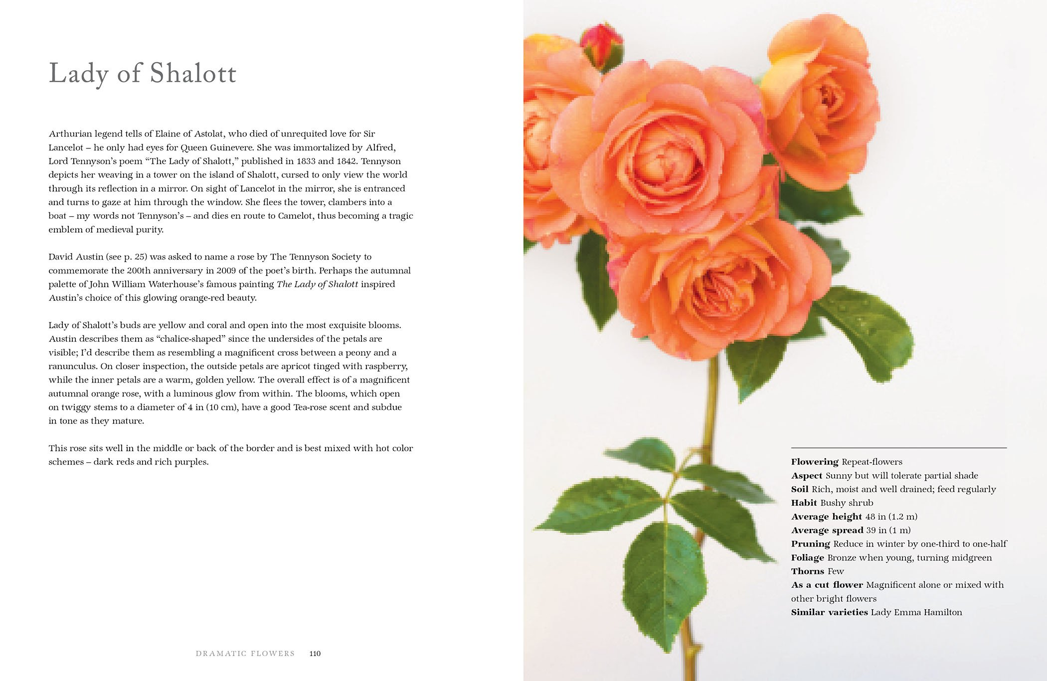 Vintage roses beautiful varieties for home and garden jane vintage roses beautiful varieties for home and garden jane eastoe georgianna lane 9781423646716 amazon books fandeluxe Document