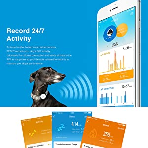 Petkit Pet Activity Monitor for Dogs and Cats
