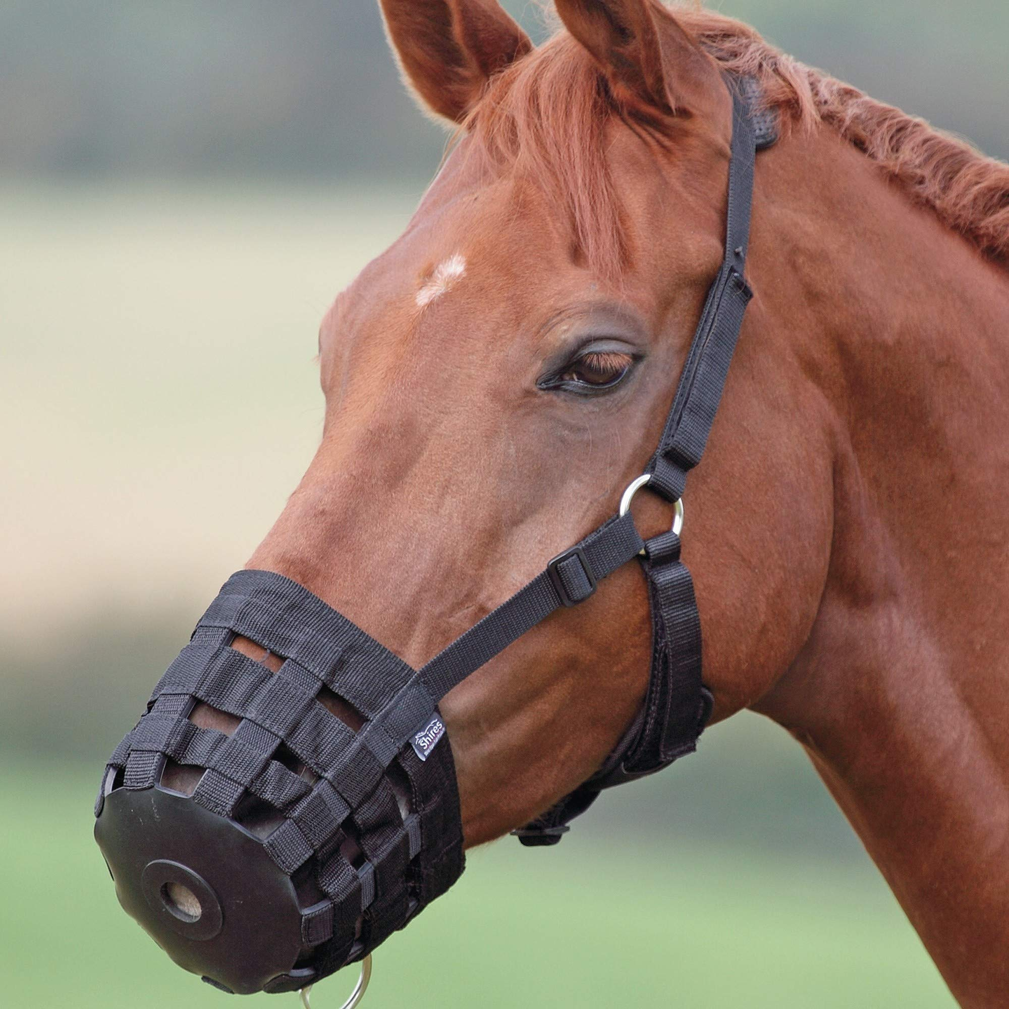 RLQ Horse Muzzle, Horse Supply Deluxe Comfort Lined Grazing Muzzle, Equestrian Equipment with Chin and Neck Pads,XS by RLQ