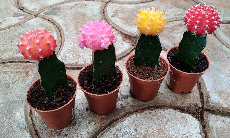 plant pots online