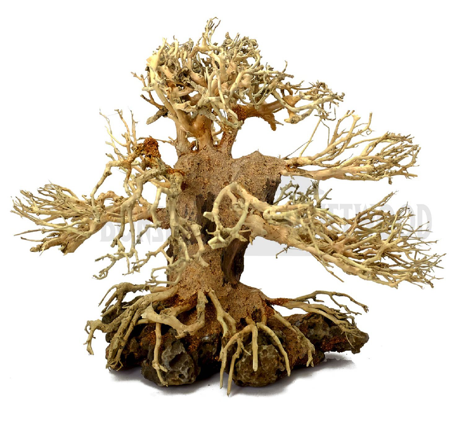 Bonsai Driftwood Aquarium Tree ALS on rock (6 Inch Height) Natural, Handcrafted Fish Tank Decoration | Helps Balance Water pH Levels, Stabilizes Environments | Easy to Install