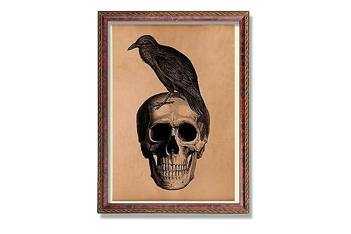 Amazon Raven Print Vintage Bird Decor Skull Illustration