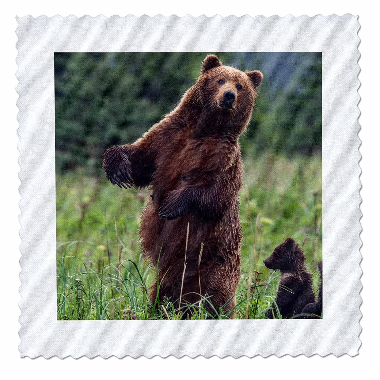 - Quilt Square Brown Bear and cub 12 by 12-inch qs/_205543/_4 3dRose USA Southeast Alaska