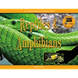 Reptiles & Amphibians: An Augmented Reality Popup Book